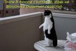 http://thumbnails35.imagebam.com/10494/b2b611104933660.jpg