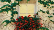 Flowers and Gardens HQ wallpapers Collection 2 Ccf051108363574
