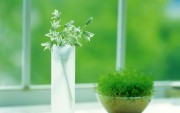 Green Plants Birth HD Wallpapers 36bc64108975284